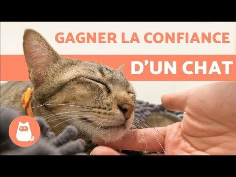 Comment Gagner La Confiance D'un Chat ? – 5 Conseils Efficaces !