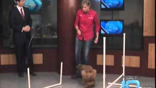 Side Kick Dog Training Presents: Indoor Agility