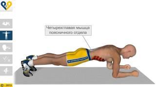 Планка - упражнение для укрепления мышц пресса и всего тела(Упражнение