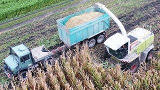 Lohnunternehmen Strobl Agrar: Maisernte - Teil 3 [Unimog + Claas Jaguar]