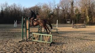 Dhalyda du Bosdel | Premiers sauts montée | Cheval à vendre