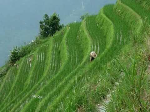 China Y Las Terrazas De Cultivos Con Arroz En Yunnan