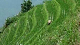 Longsheng terrazas de arroz en China..wmv