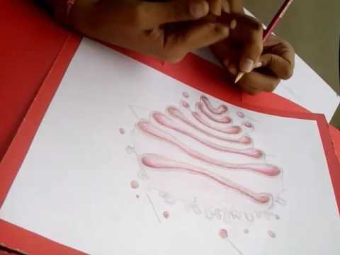 Golgi Apparatus Drawing By D D Youtube