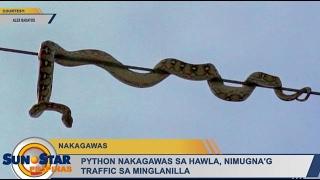 Python nakagawas sa hawla, nimugna'g traffic sa Minglanilla