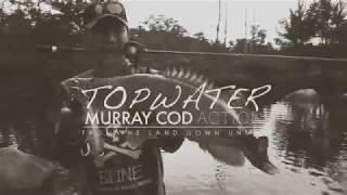 Topwater Murray Cod Action FULL: BONE Fishing World