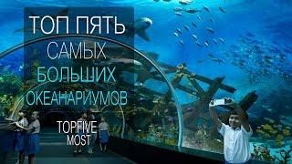 видео Самые большие и лучшие океанариумы России. ТОП 5 |