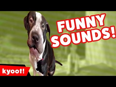 The Funniest Pet Noises & Sounds of 2016 Weekly Compilation | Kyoot Animals
