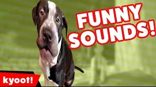 The Funniest Pet Noises & Sounds of 2016 Weekly Compilation   Kyoot Animals