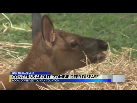 What to do if you spot an infected deer – Alabama Alerts