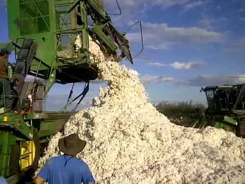 hqdefault - Les fibres textiles : La récolte du coton