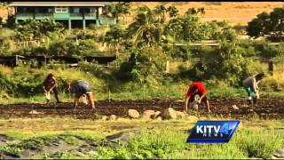 Where You Live: Waianae
