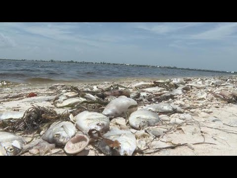 """Red tide"" toxic algae outbreak in Florida prompts health concerns"