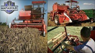 Żniwa 2018 ☆ Co tu się stało!?? Massey Ferguson 86 & -U-R-S-U-S- c360 3p ✔ Vlog GoPro