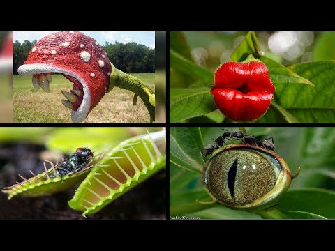 Top 10 Amazing Bizarre Plants in the world -- wow
