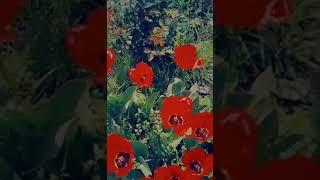 Güllere aid qisa video