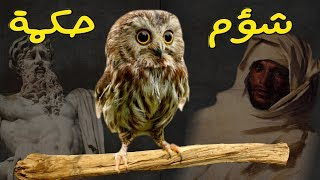 اسمع صوت البومة 🦉 - ومعلومات مثيرة عن طائر الشؤم والحكمة