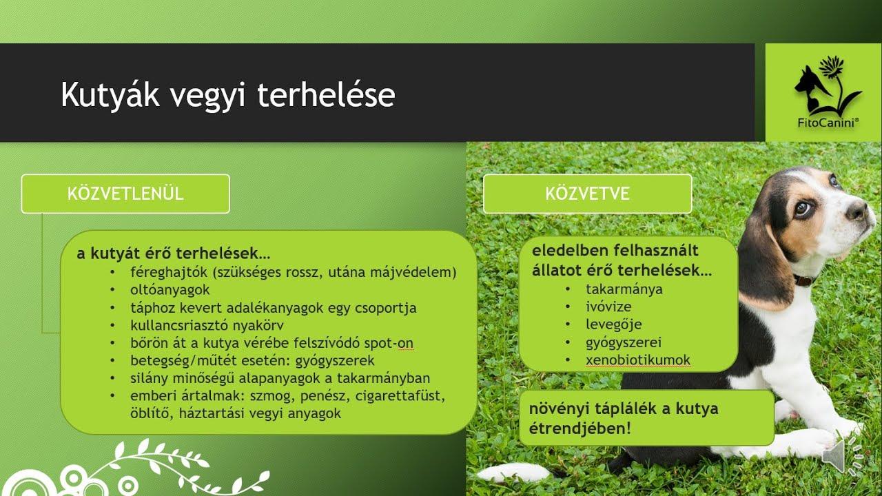 Salaktalanítás, méregtelenítés kutyáknak, gyógynövényekkel - FitoCanini®