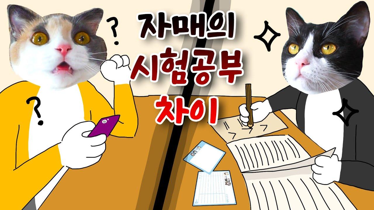 3가지 시험 공부 유형 | 고양이산책