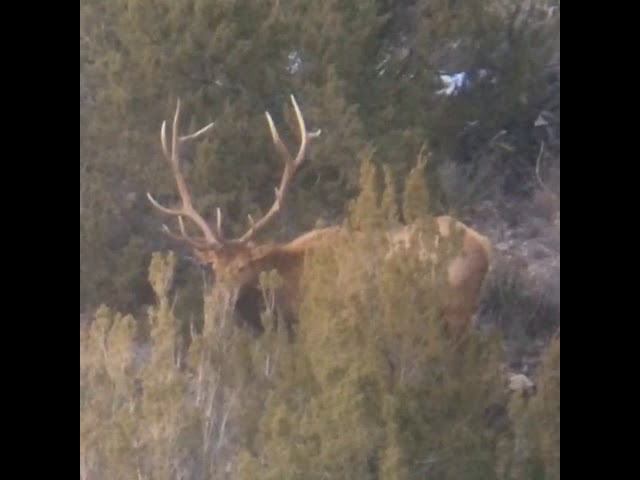 Video May 01, 8 36 14 AM - Elk