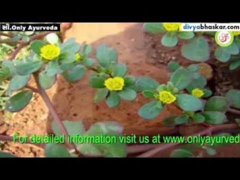 Medicinal use of luni crop