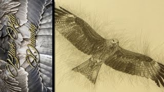 Black Kite - Drawing ᴴᴰ