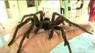 BIG spider - tarantula on my hand