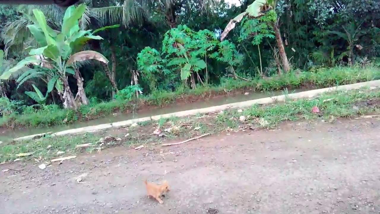 Tabrak kucing