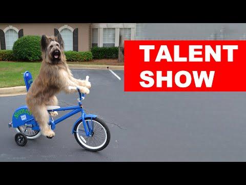 Animals Got Talent Compilation 2019 | Funny Animals Videos
