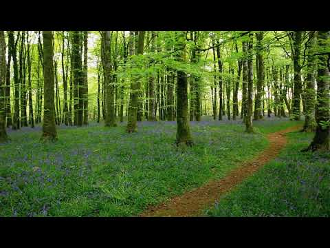 download calming forest picture - photo #22