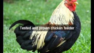 Chicken Feeders | Monterey | Ca | Automatic Chicken Feeder | Feeding Chickens | Poultry Feeders|hens