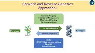 Forward and Reverse Genetics made easy