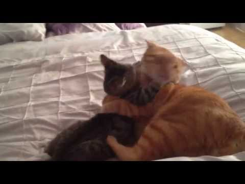 Hug Wrestling with Tigger the Cat