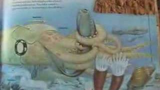 Fossil Cephalopods Introduction - part 1 of 3