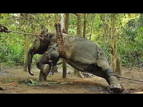 Laos - Land of the Million Elephants