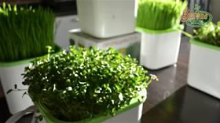 Хранение микрозелени