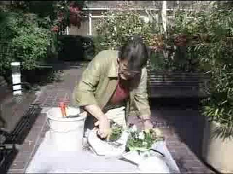 Henry Tenenbaum's Hospital Gardening 101