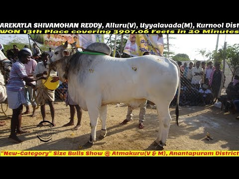 "2019 ATMAKUR ""CATEGORY"" 13th Place WON by AREKATLA SHIVAMOHAN REDDY, Alluru(V)-3907.06FT"