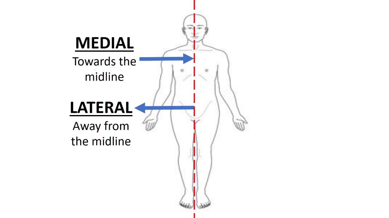 AnatomyKara Lesson 2: Directional Terms - YouTube