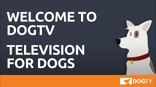 Welcome to DOGTV
