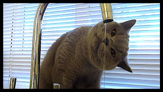 CAT DRINKING WATER FROM THE TAP! | CHRIS & EVE