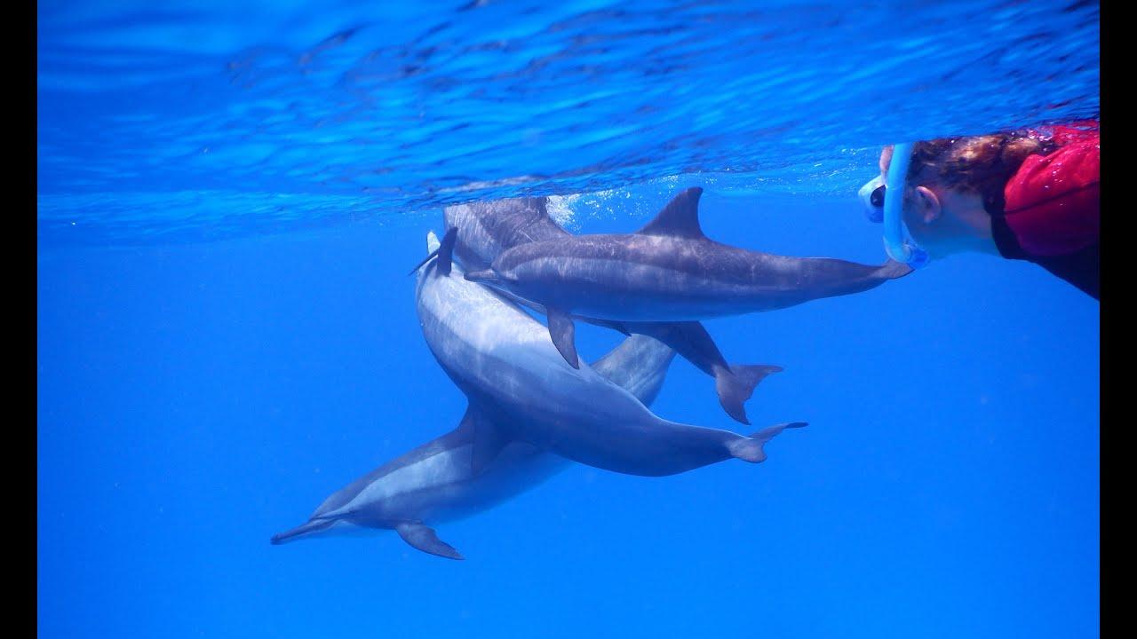 Une semaine en mer rouge r aliser son r ve nager avec les for Nager avec les dauphins nice