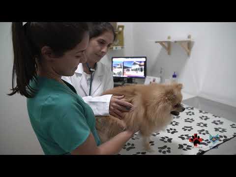 Pet Med & Strix: Excelência no Cuidado com os Pets