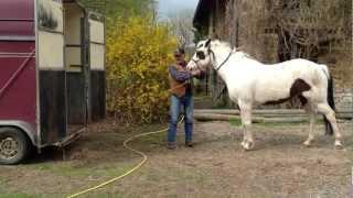 Comment monter un cheval seul dans un van facilement