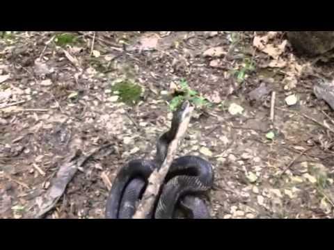 Snake in the backyard - YouTube