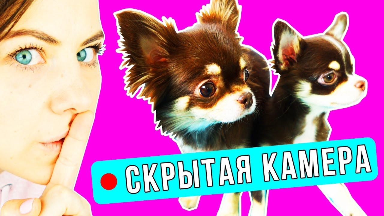 skritie-kameri-chto-delayut-devushki-kogda-odni-porno-video-minet-muzhu-skritaya-kamera