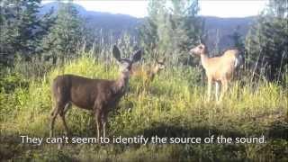Deer Whistling