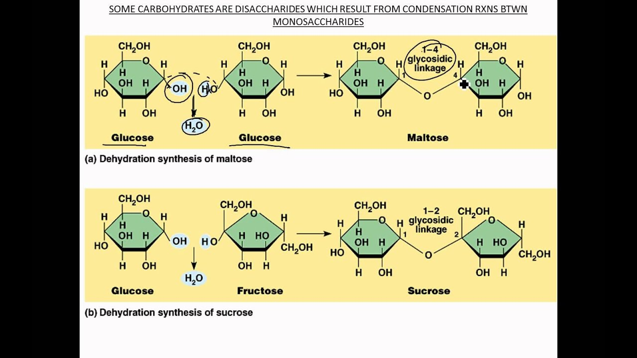condensation of carbohydrates - HD 1024×768