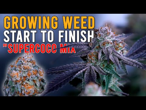 """HOW I GREW WEED FROM START TO FINISH IN """"SUPERCOCO MIX"""" JUST ADD WATER! CRAZY PLANT TRANSFORMATION"""