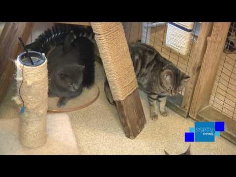 Adopt Me - Hazleton Animal Shelter - SSPTV News